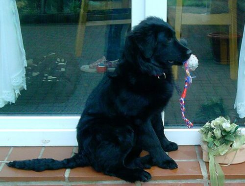 Ghandi | Border Collie Mischling | kleinstadthunde.de