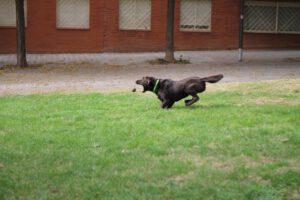 Von der Unart mit seinem Hund Ball zu spielen | Warum Ballspielen gefährlich ist | kleinstadthunde.de