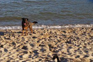 Unterwegs am Südstrand in Wilhelmshaven mit Hund | kleinstadthunde.de