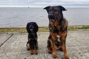 Unterwegs am Südstrand in Wilhelmshaven mit Hund   kleinstadthunde.de