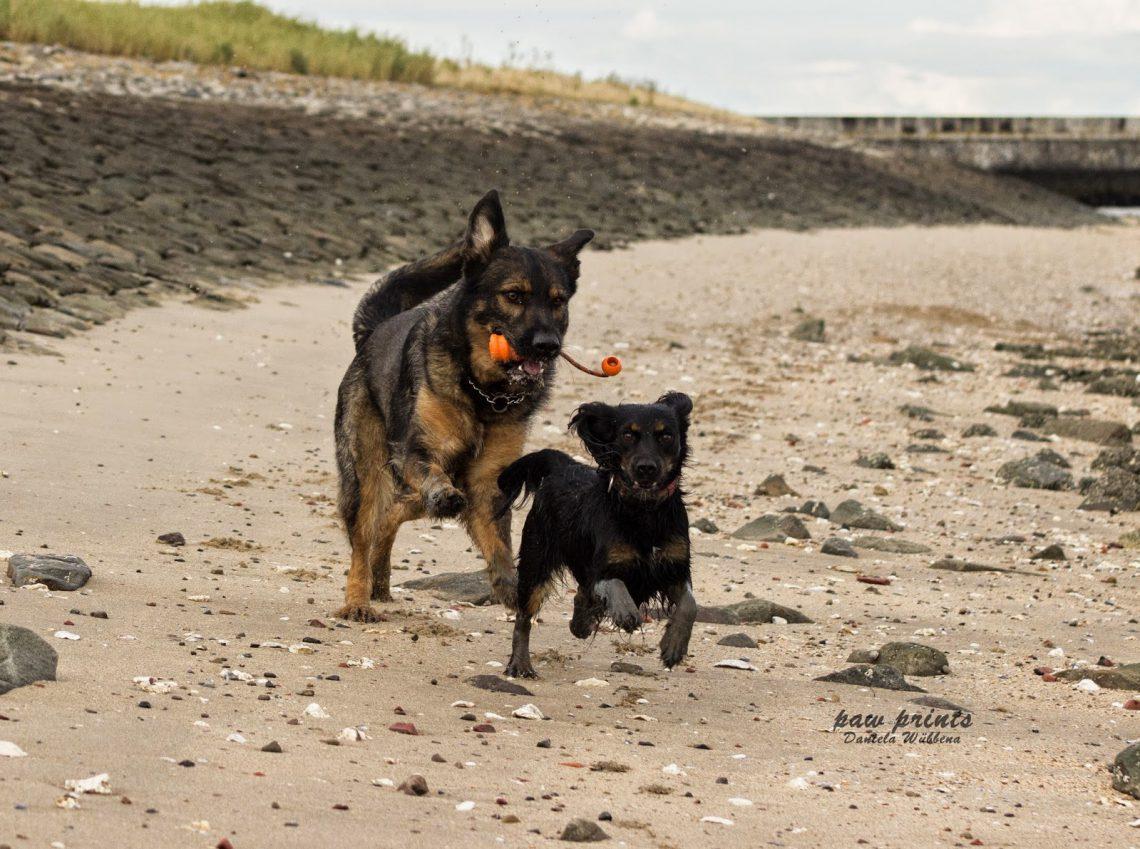 Mehrhundehaltung | sinnvoll oder nicht? | kleinstadthunde.de