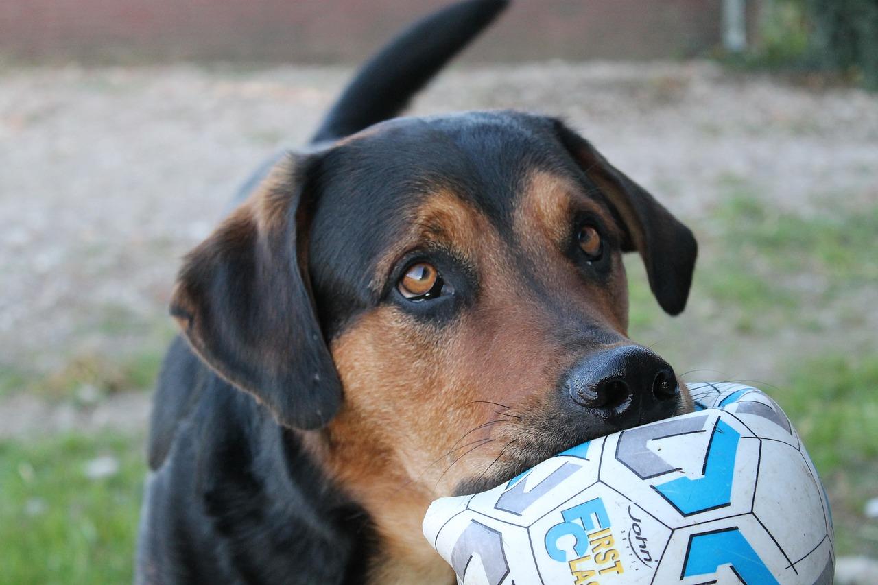 Belohnung oder Bestechung? Warum Hunde belohnt werden sollten