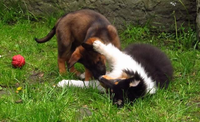 Welpen richtig sozialisieren | kleinstadthunde.de