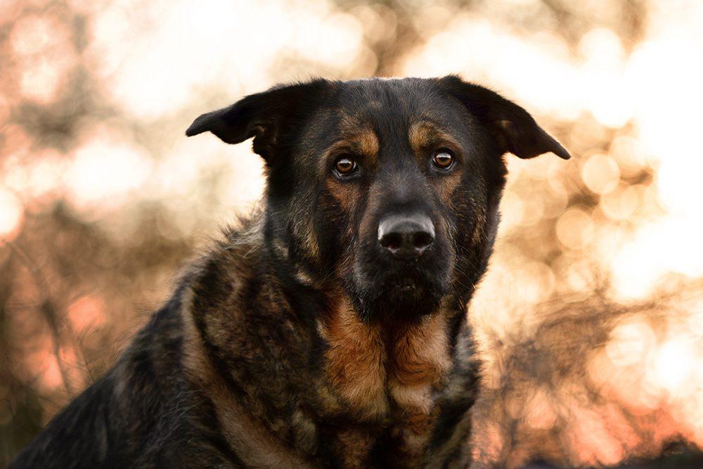 Inuki |kleinstadthunde.de