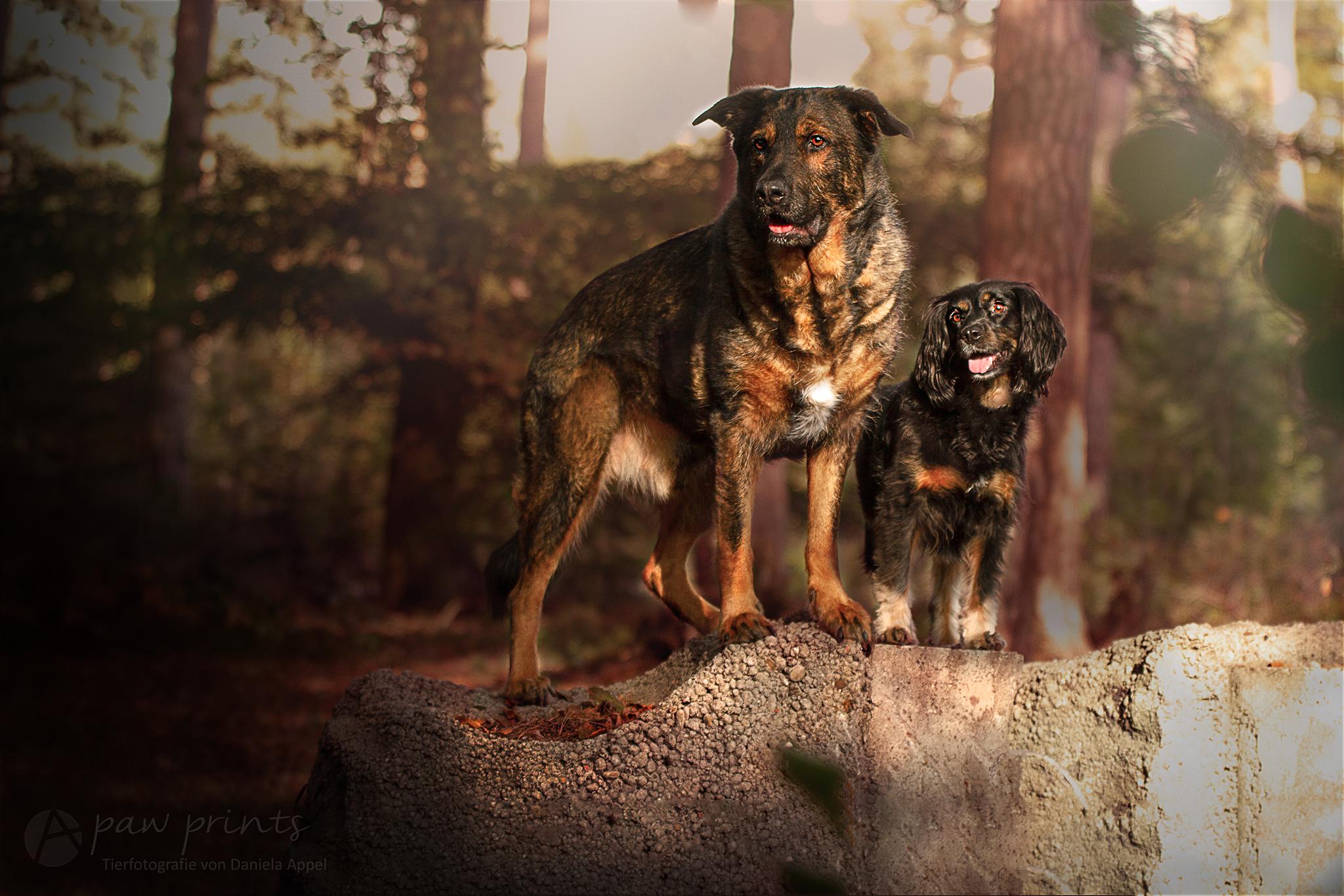 Inuki und Skadi | kleinstadthunde.de