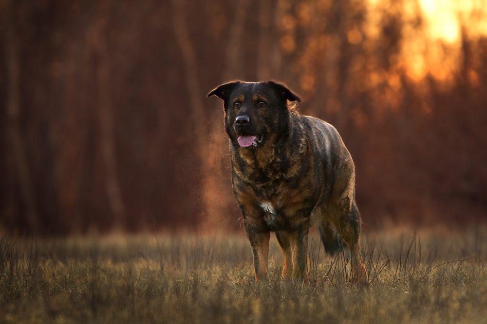 Inuki Skad | Kleinstadthunde.de