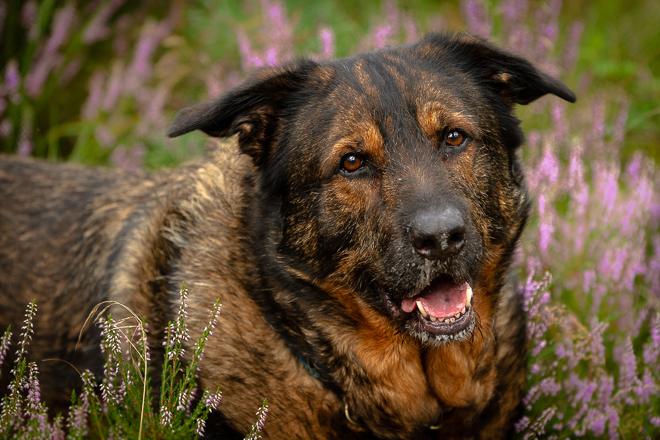 Inuki | Warze | Knubbel | kleinstadthunde.de