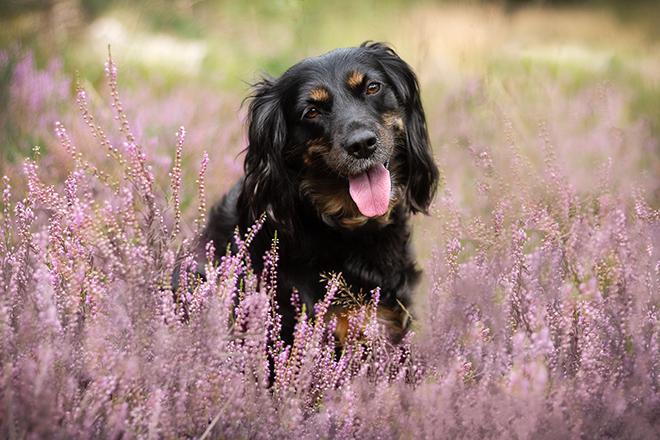 Skadi | Komische Angewohnheiten im Zusmmenleben mit Hunden |Kleinstadthunde.de
