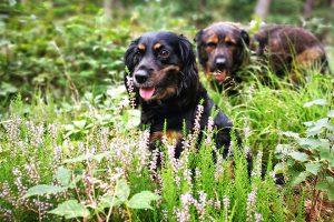 Skadi | Hunde im Wald | kleinstadthunde.de
