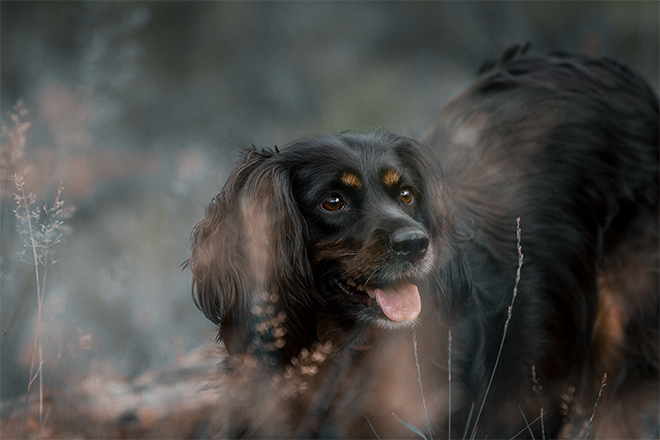 Skadi | Working Cocker Spaniel | Kleinstadthunde.de
