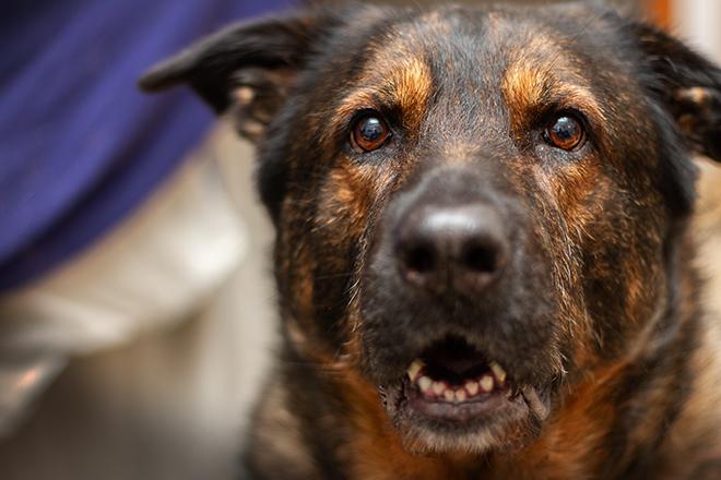 Inuki | kleinstadthunde.de