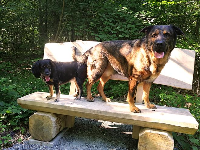 Skadi | Working Cocker Spaniel | Schäferhundmischling | Inuki | kleinstadthunde.de