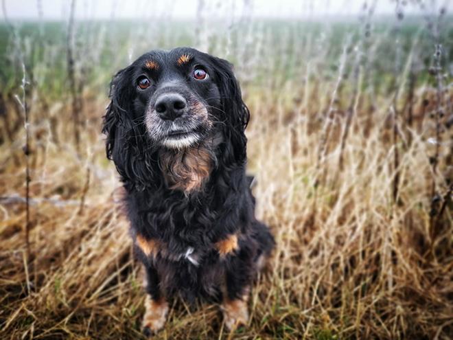 skadi Inuki | kleinstadthunde.de