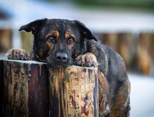 Inuki | knochen für hunde? | kleinstadthunde.de