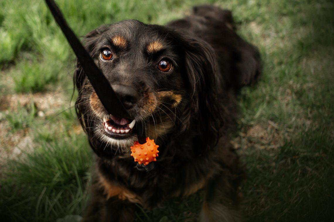 Skadi am spielen | kleinstadthunde.de