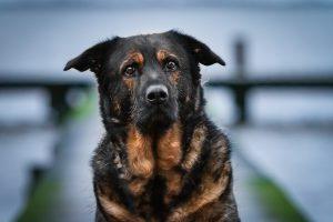 Inuki in Dangast | kleinstadthunde.de