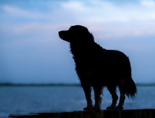 Skadi in Dangast | kleinstadthunde.de