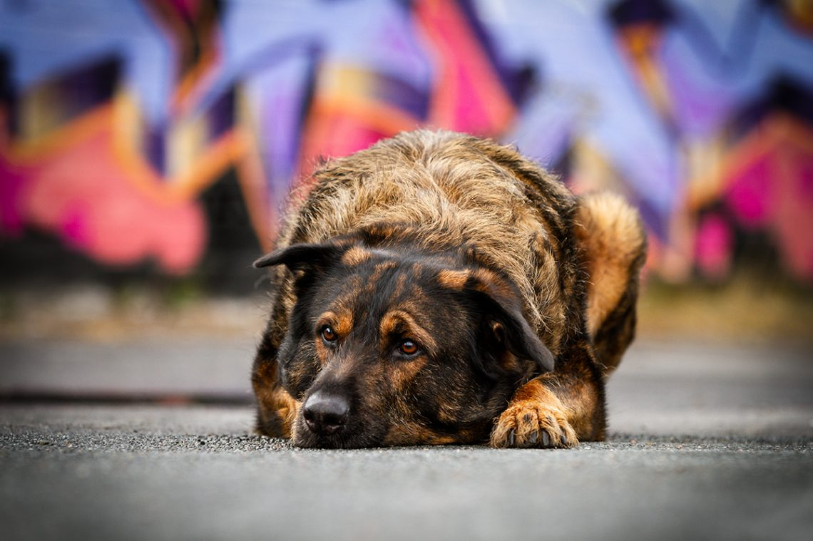 Inuki_kleinstadthunde.de _ Graffiti