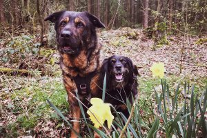 Frohe Ostern | kleinstadthunde.de