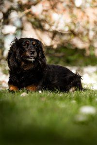 Inuki | Magnolie in Wilhelmshaven | kleinstadthunde.de | Fotografie in Friesland, Zetel und Varel paw-prints.de