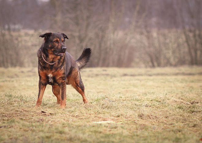 Doppelter Rückruf Trainingsanleitung | kleinstadthunde.de