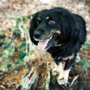 Die Woche der Eisheiligen | Neuenburger Urwald | Zetel | kleinstadthunde.de