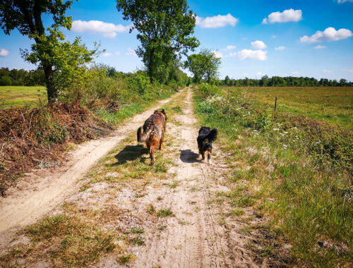 Bockhorner Moor mit Hund | kleinstadthunde,de