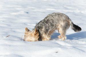 Umweltbelohnungen bei Hunde
