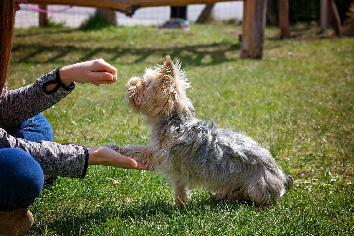 Clickertraining mit Hunden | Pfötchen geben