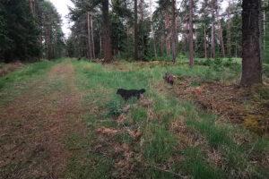 Unterwegs im Knyphauser Wald mit Hund