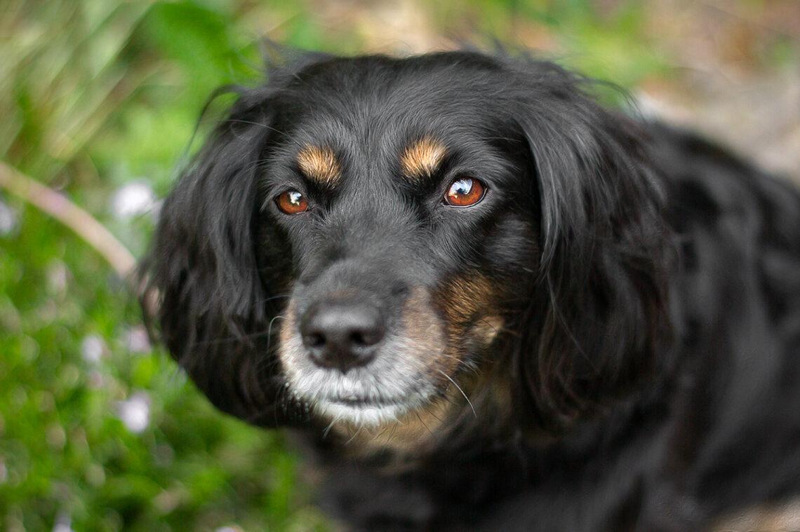 Spenden für den Tierschutz | Tue gutes und rede darüber | Working Cocker Spaniel | Skadi | kleinstadthunde.de