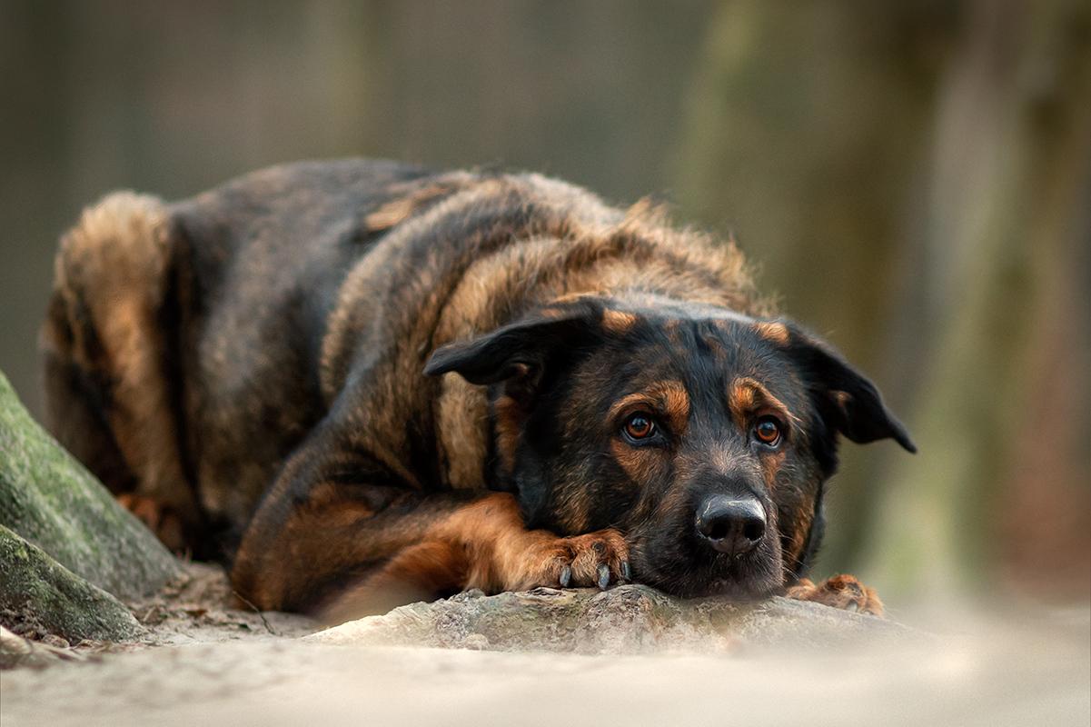 Spenden für den Tierschutz | Tue gutes und rede darüber | Inuki | Schäferhund Riesen Schnauzer | Berner Senne | kleinstadthunde.de