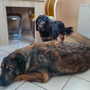 Inuki und Skadi | kleinstadthunde.de | Blog für Hund und Halter