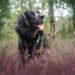 Inuki und Skadi Working Cocker Spaniel| kleinstadthunde.de | Blog für Hund und Halter