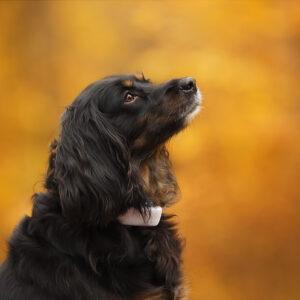 Tractive GPS Tracker für Hunde | Erfahrungsbericht | Gutschein | kleinstadthunde.de