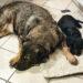 Friesland mit Hund - Hundeblog - kleinstadthunde.de