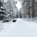 Winter | Friesland | kleinstadthunde.de