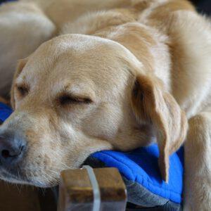 Welches Hundebett ist das richtige? | kleinstadthunde.de