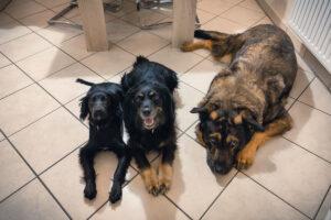 futalis Hundefutter - individuell und bedarfsgerecht - Erfahrungsbericht - Hundeblog - kleinstadthunde.de-4