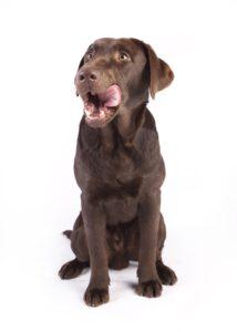Getreidefreies Hundefutter | kleinstadthunde.de