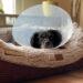 Blasensteine beim Hund - Operation - Hundeblog - kleinstadthunde.de-6