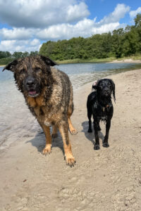 Rinti Drinki - Flüssiger Snack für Hunde - Hundeblog - kleinstadthunde.de-4
