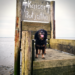 Hundestrand Dangast | kleinstadthunde.de