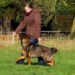 Hundesport | kleinstadthunde.de